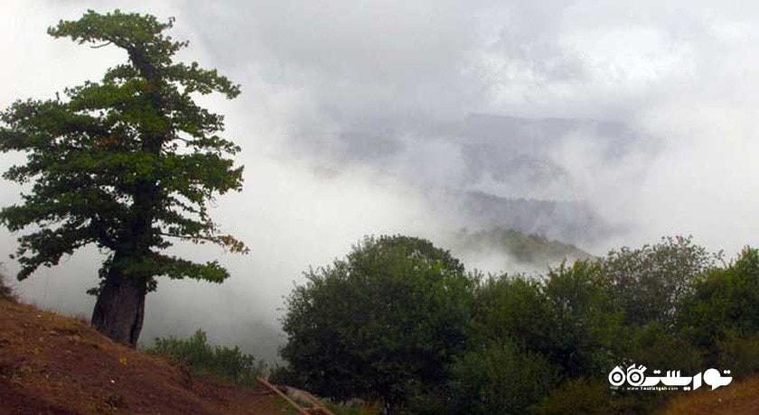 جنگل ابر شاهرود (جنگل ابر خرقان و بسطام) شهرستان سمنان استان شاهرود