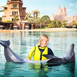 دلفین بی