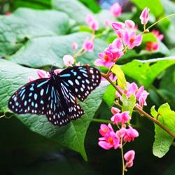 باغ پروانه کوالالامپور