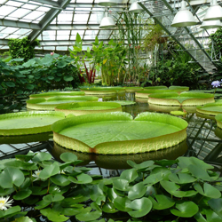 باغ گیاه شناسی سن پترزبورگ