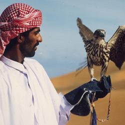 تماشای شاهین در دبی