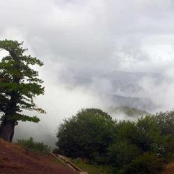 جنگل ابر شاهرود (جنگل ابر خرقان و بسطام)