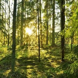 جنگل هلی دار