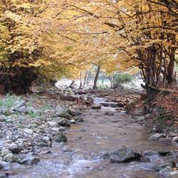 جنگل و چشمه نیلبرگ رامیان