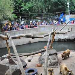 باغ وحش ایروان