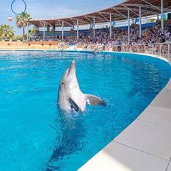 پارک دلفین سیلانیا