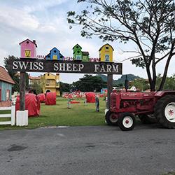 مزرعه گوسفند سوئیسی