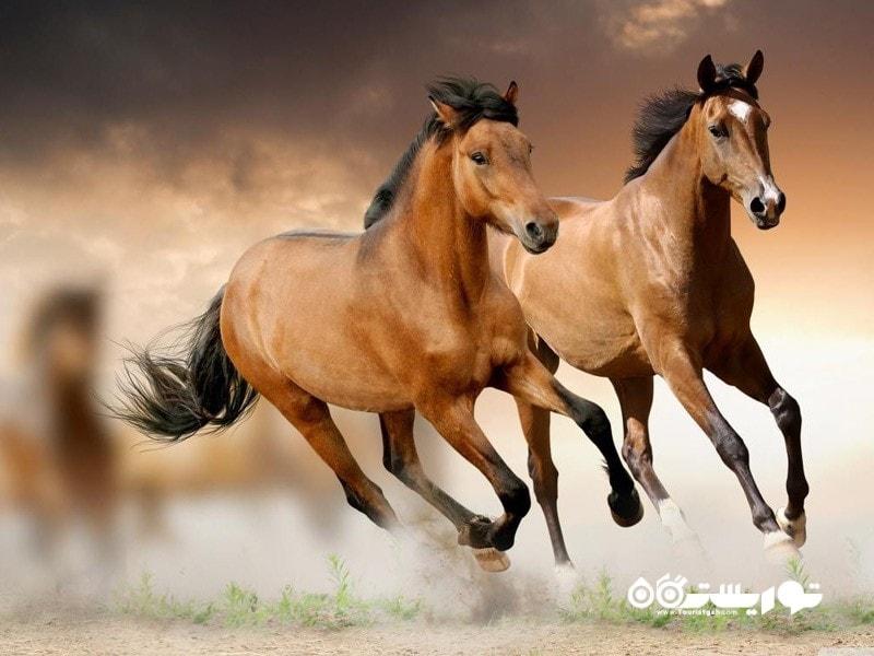6- اسب هایش قهرمان هستند