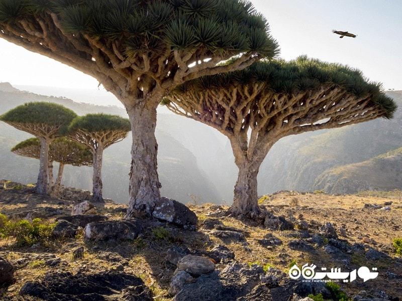 سوکوترا، یمن Socotra, Yemen