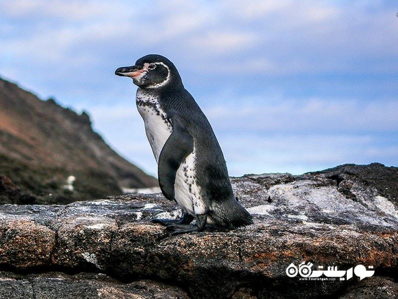 پنگوئن در نیمکره شمالی