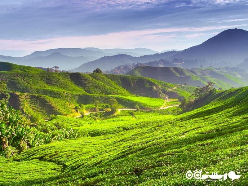 منطقه کامرون هایلند