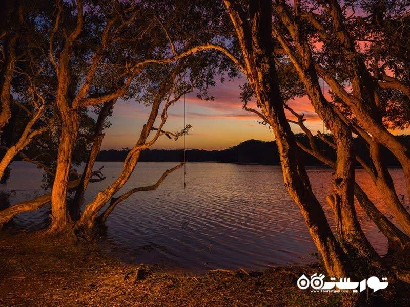 شنا در دریاچه های حاوی روغن درخت چای