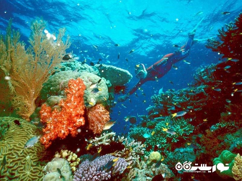زندگی اعماق دریا در صخره های مرجانی گرِیت بَرییِر