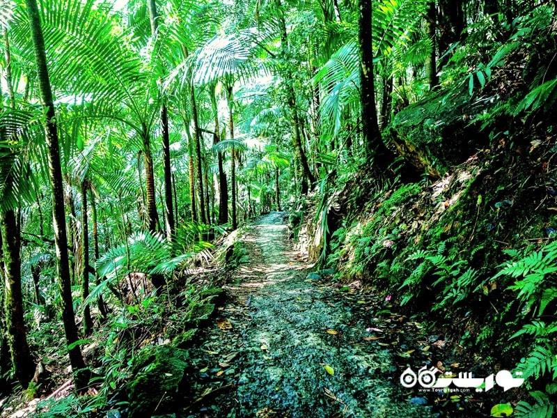 2. جنگل ملی ال یونیک جاذبه گردشگری پورتوریکو