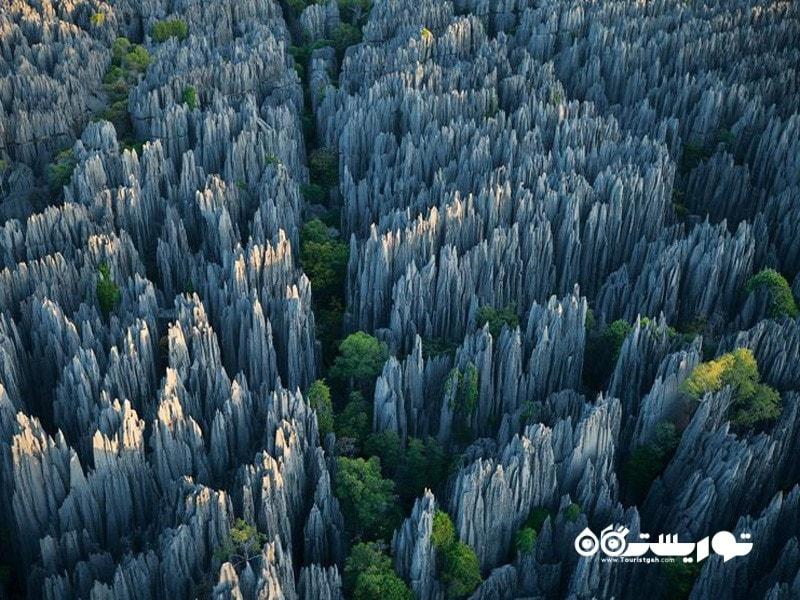 36.فارست آو نایوز (Forest of Knives)، ماداگاسکار