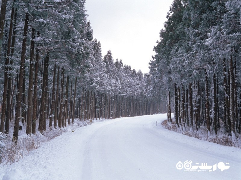 چشم اندازی فریبنده از جنگل های یخ زده در زمستان