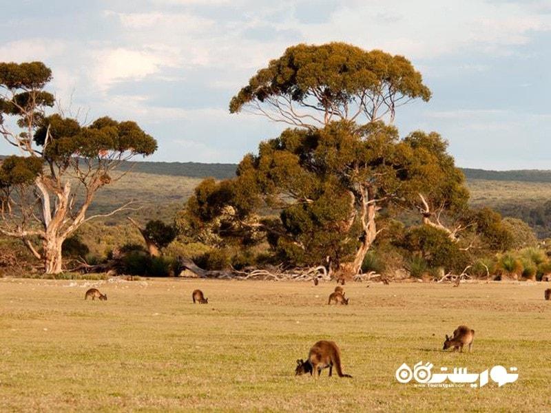 29.جزیره کانگرو (Kangaroo Island)، استرالیا