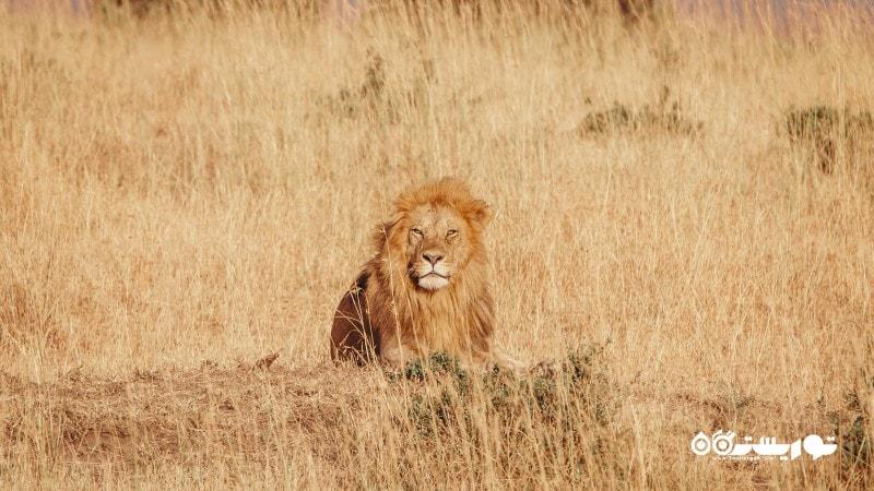 4- کنیا Kenya