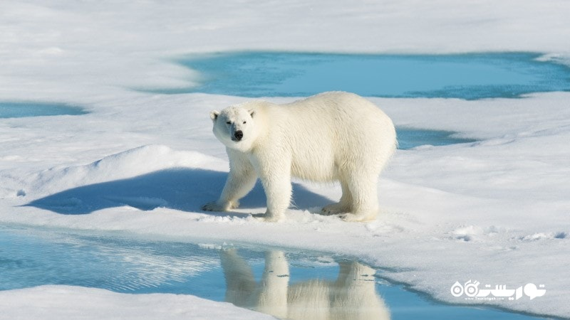 6- قطب شمال