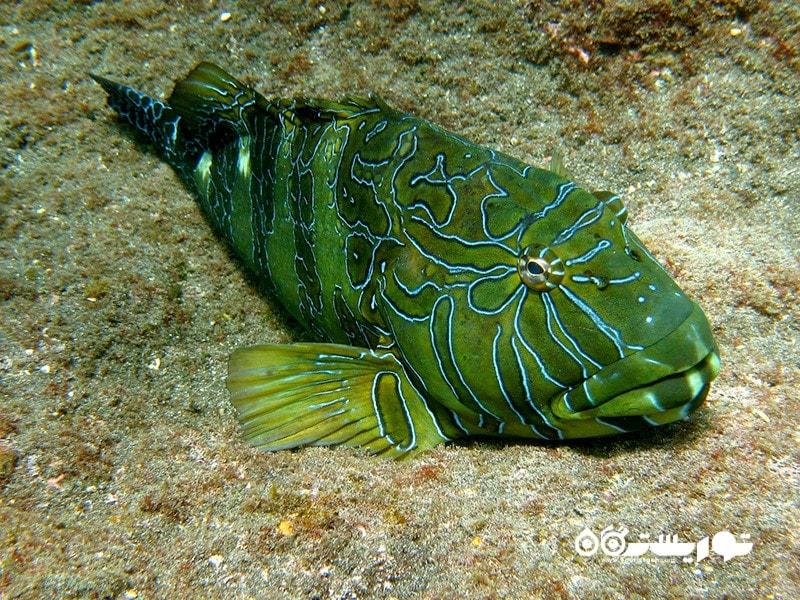 800 گونه از نرم تنان و گونه های متعددی از ماهیان