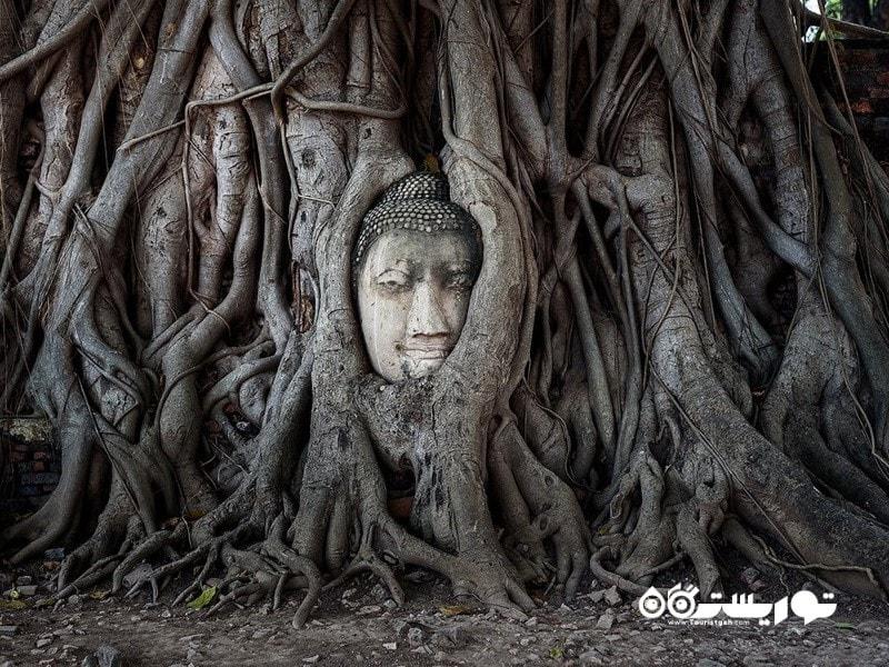13- سر بودا در ریشه های درخت انجیر هندی