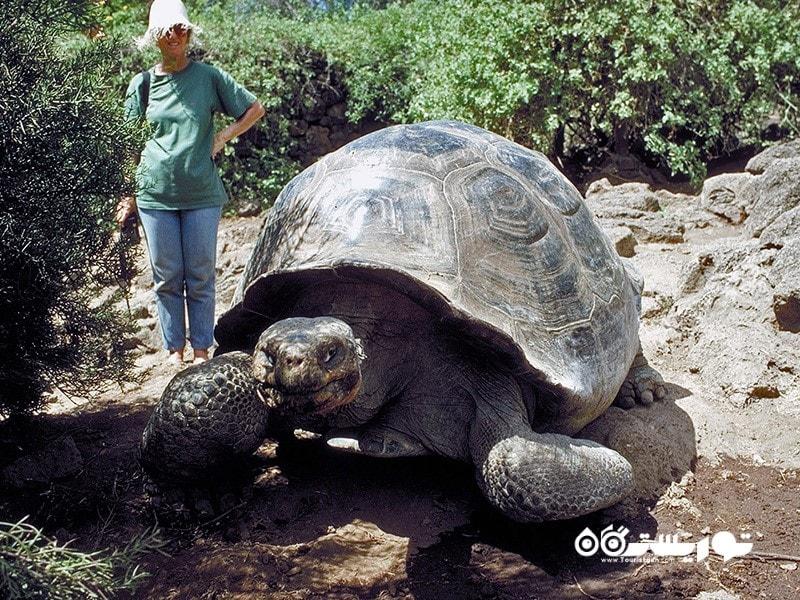 کلمه گالاپاگو به لاک پشت های نمایدین این جزایر اطلاق می شود