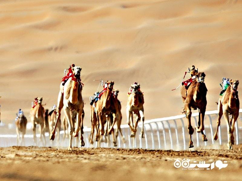 6: مسابقات شترسواری در دبی